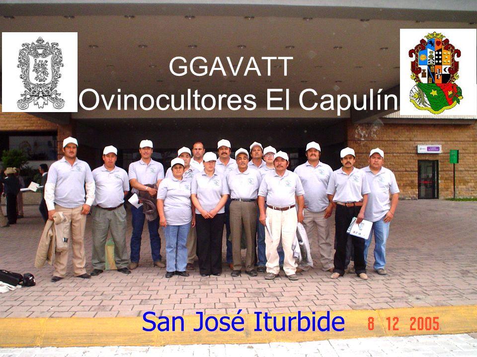 GGAVATT Ovinocultores El Capulín