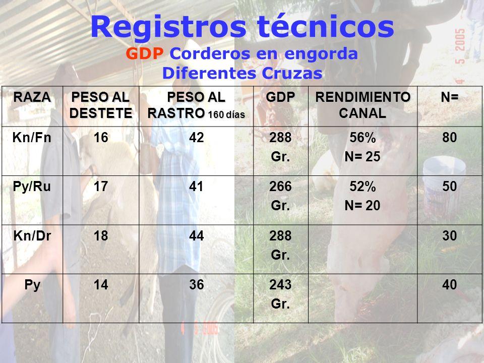Registros técnicos GDP Corderos en engorda Diferentes Cruzas