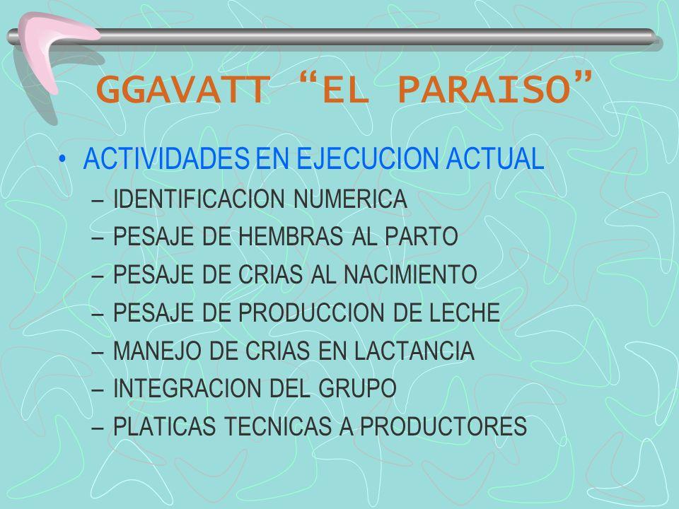 GGAVATT EL PARAISO ACTIVIDADES EN EJECUCION ACTUAL