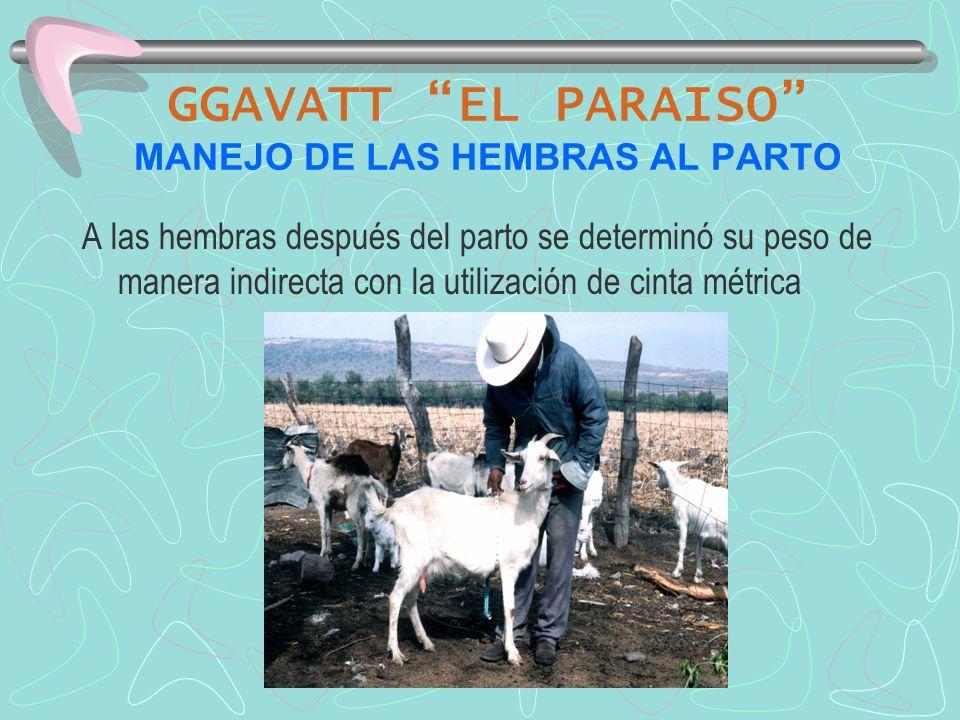 GGAVATT EL PARAISO MANEJO DE LAS HEMBRAS AL PARTO