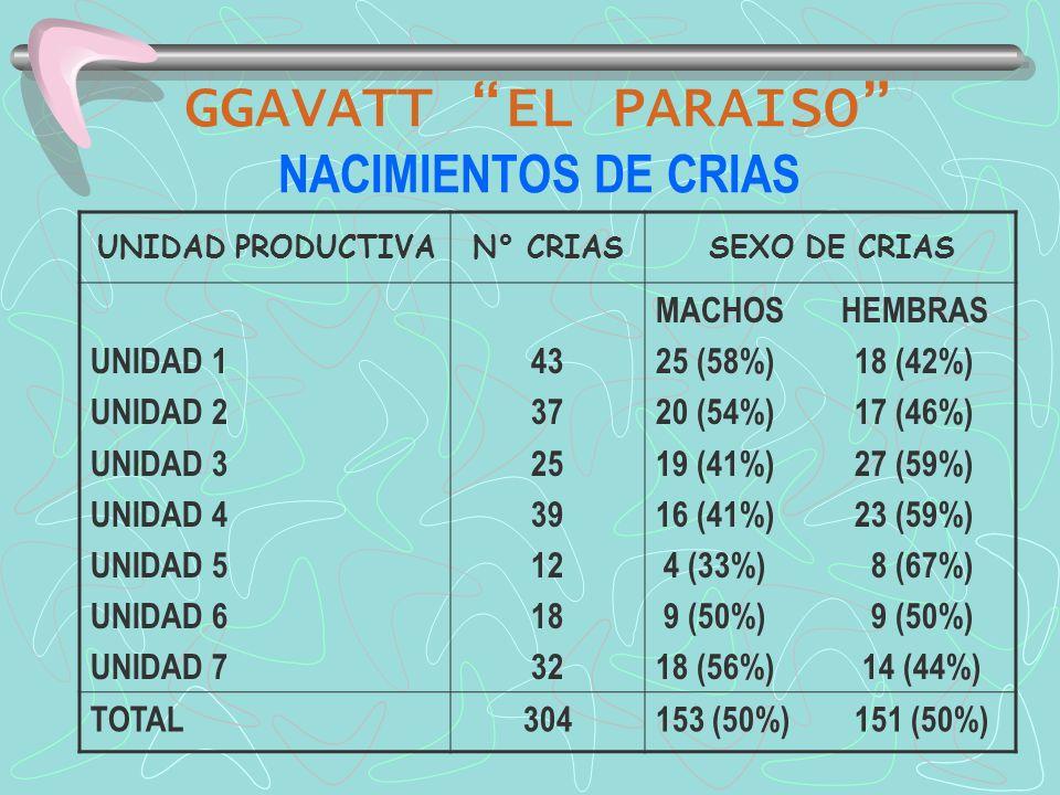 GGAVATT EL PARAISO NACIMIENTOS DE CRIAS