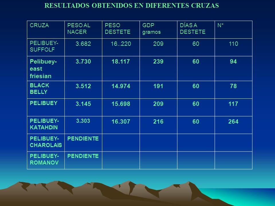 RESULTADOS OBTENIDOS EN DIFERENTES CRUZAS