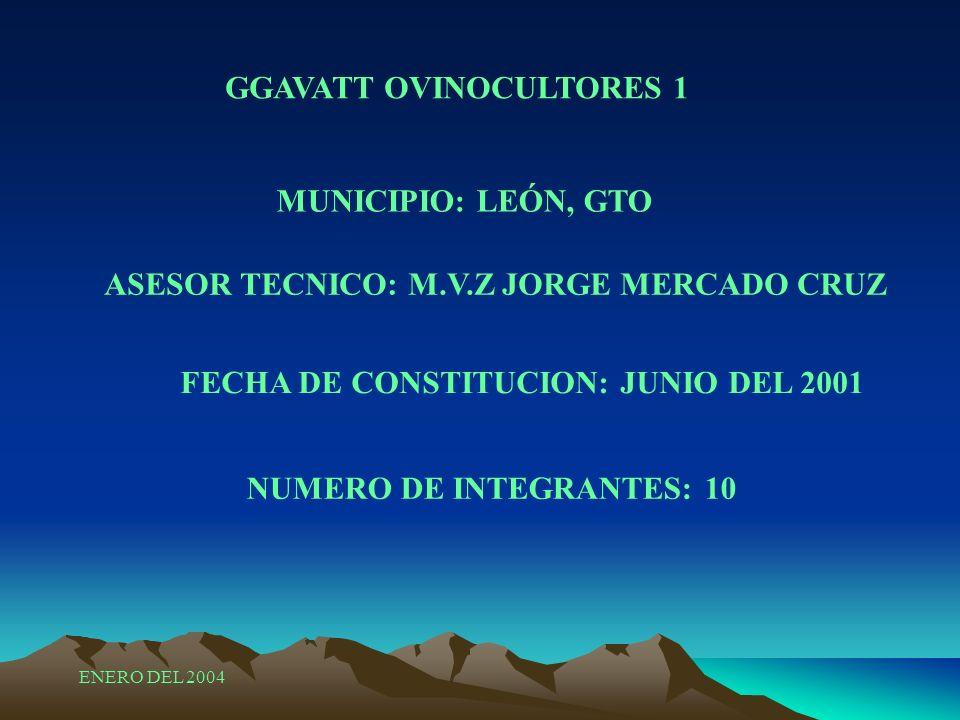 ASESOR TECNICO: M.V.Z JORGE MERCADO CRUZ