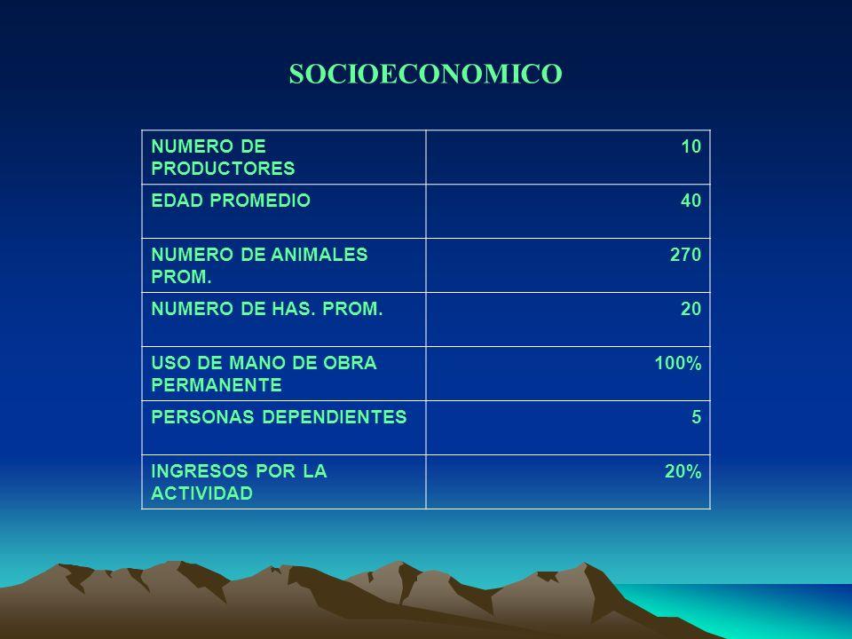 SOCIOECONOMICO NUMERO DE PRODUCTORES 10 EDAD PROMEDIO 40