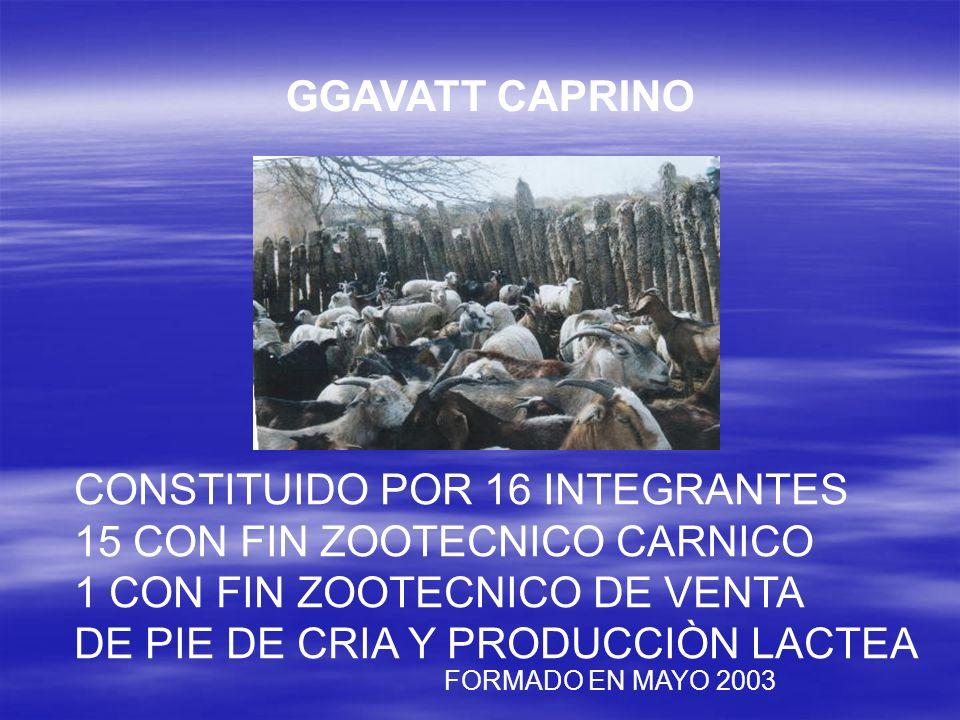 CONSTITUIDO POR 16 INTEGRANTES 15 CON FIN ZOOTECNICO CARNICO