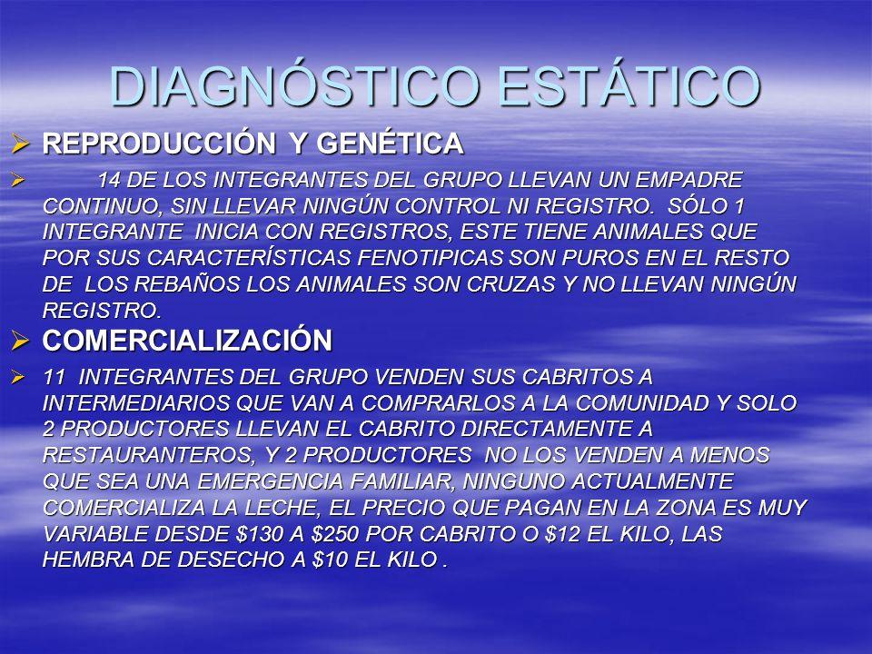 DIAGNÓSTICO ESTÁTICO REPRODUCCIÓN Y GENÉTICA COMERCIALIZACIÓN