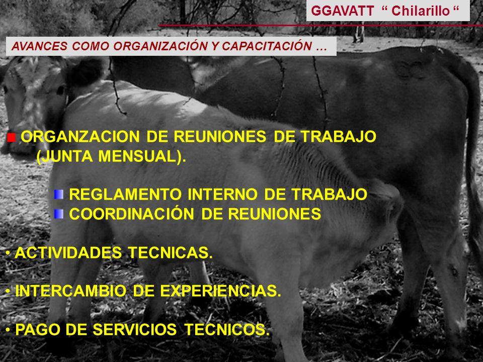 ORGANZACION DE REUNIONES DE TRABAJO (JUNTA MENSUAL).