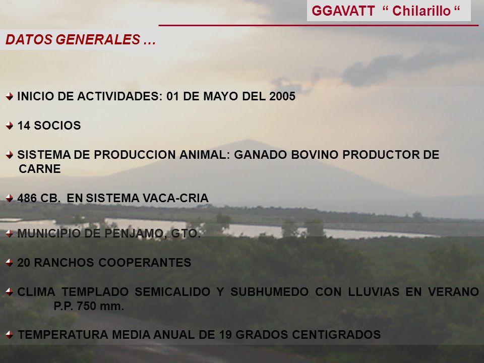 GGAVATT Chilarillo DATOS GENERALES …