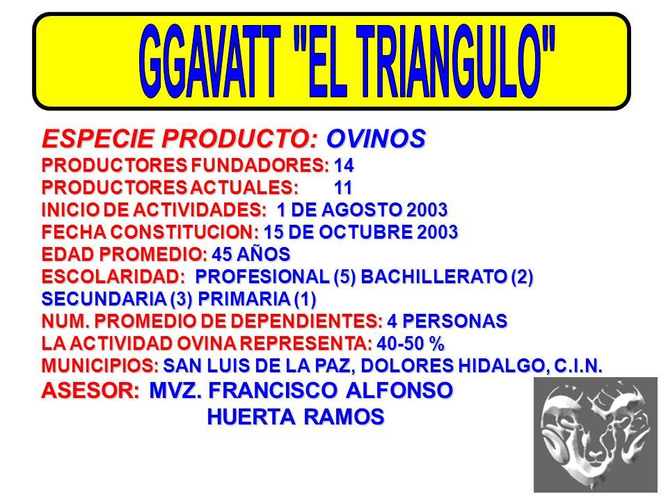 GGAVATT EL TRIANGULO ESPECIE PRODUCTO: OVINOS