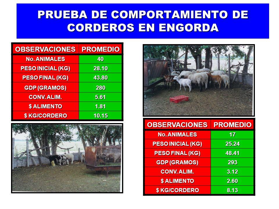 PRUEBA DE COMPORTAMIENTO DE CORDEROS EN ENGORDA