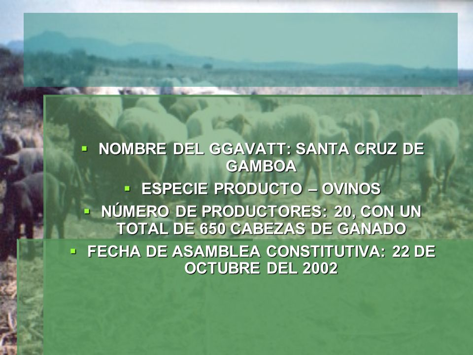NOMBRE DEL GGAVATT: SANTA CRUZ DE GAMBOA ESPECIE PRODUCTO – OVINOS