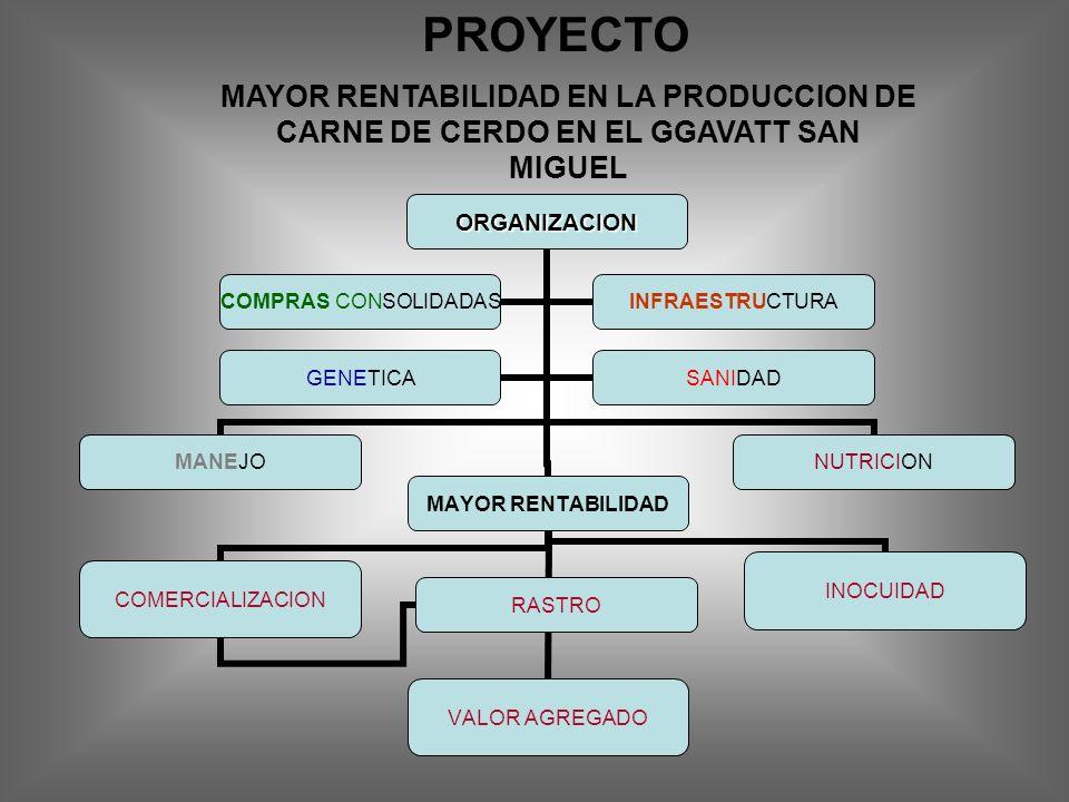 PROYECTO MAYOR RENTABILIDAD EN LA PRODUCCION DE CARNE DE CERDO EN EL GGAVATT SAN MIGUEL