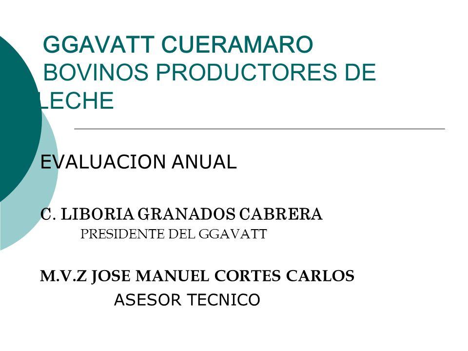 GGAVATT CUERAMARO BOVINOS PRODUCTORES DE LECHE