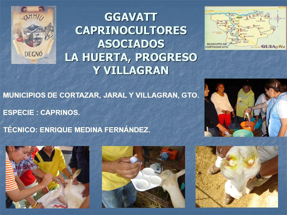 GGAVATT CAPRINOCULTORES ASOCIADOS LA HUERTA, PROGRESO Y VILLAGRAN