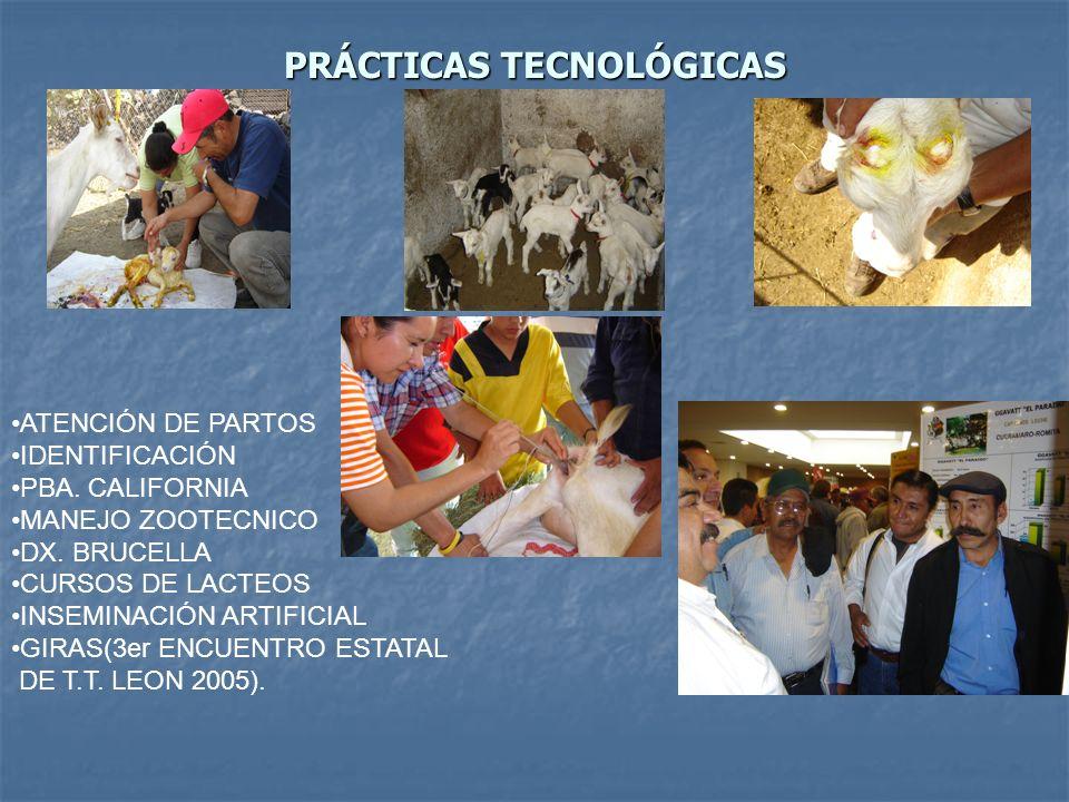 PRÁCTICAS TECNOLÓGICAS