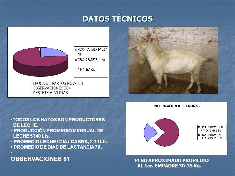 DATOS TÉCNICOS OBSERVACIONES 81 TODOS LOS HATOS SON PRODUCTORES
