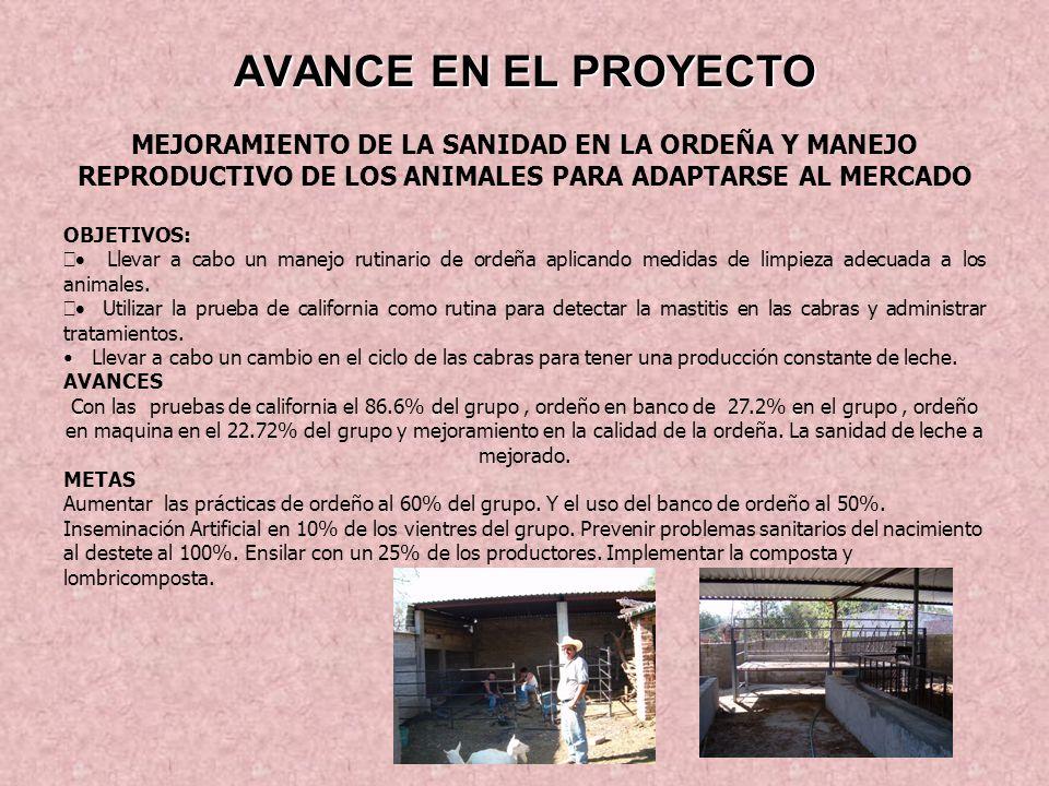 AVANCE EN EL PROYECTO MEJORAMIENTO DE LA SANIDAD EN LA ORDEÑA Y MANEJO REPRODUCTIVO DE LOS ANIMALES PARA ADAPTARSE AL MERCADO.