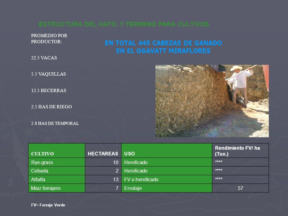 EN TOTAL 445 CABEZAS DE GANADO EN EL GGAVATT MIRAFLORES