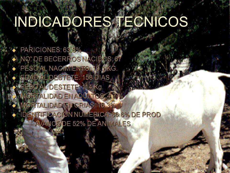 INDICADORES TECNICOS PARICIONES: 63.8% NO. DE BECERROS NACIDOS: 67