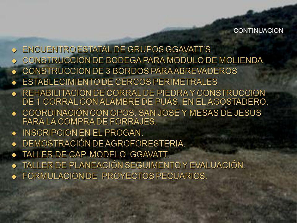 ENCUENTRO ESTATAL DE GRUPOS GGAVATT'S