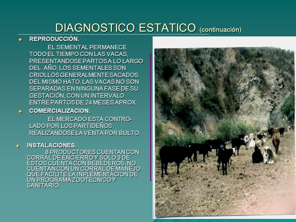 DIAGNOSTICO ESTATICO (continuación)