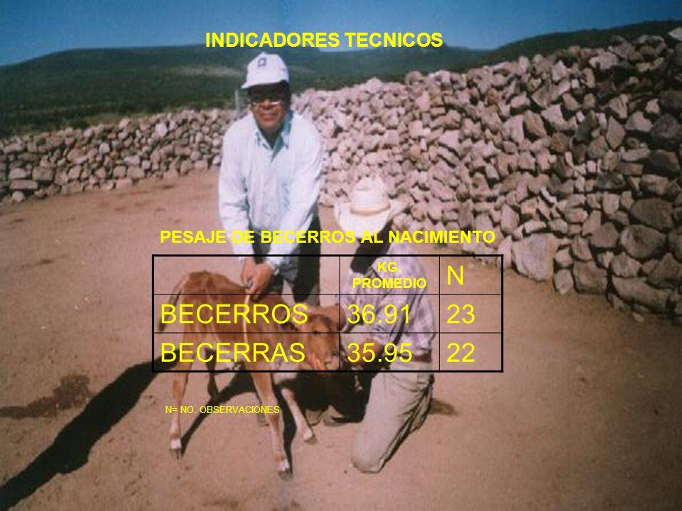 N BECERROS 36.91 23 BECERRAS 35.95 22 INDICADORES TECNICOS