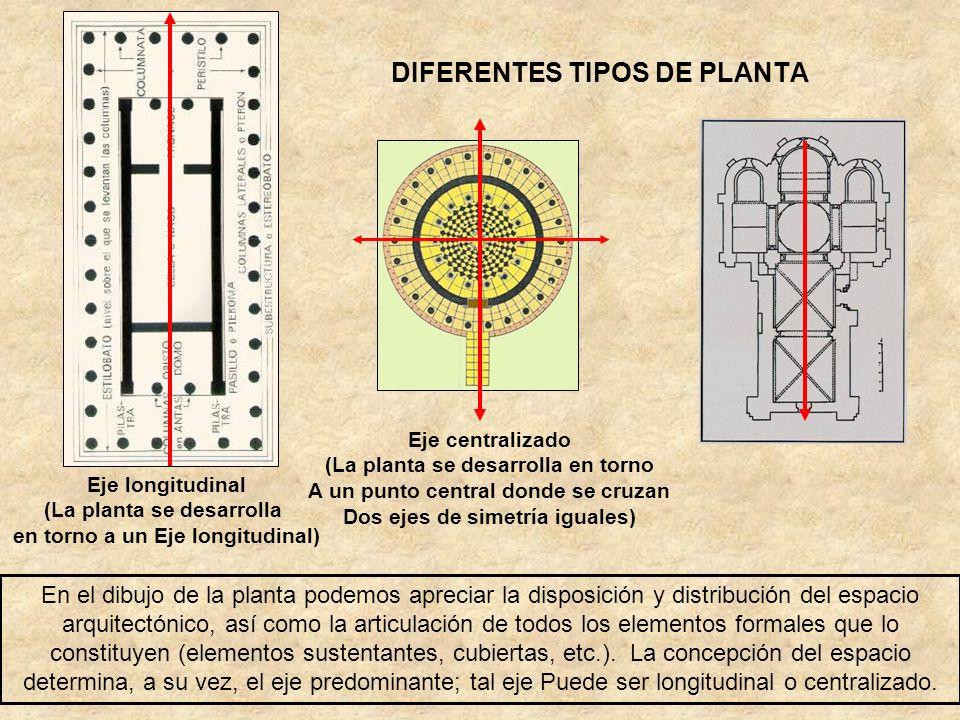 DIFERENTES TIPOS DE PLANTA
