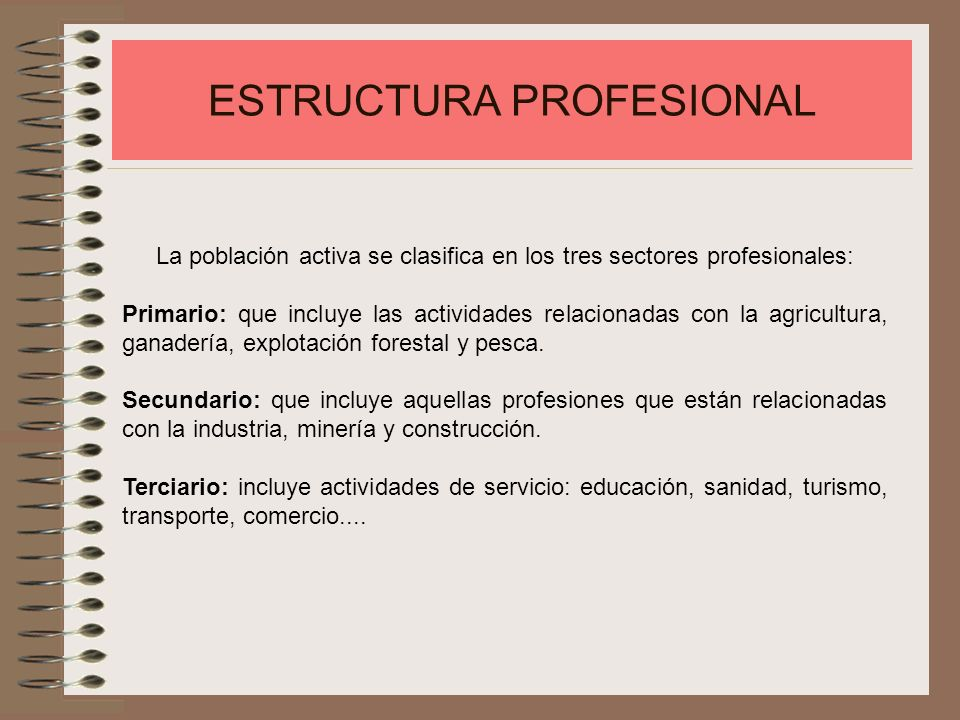 ESTRUCTURA PROFESIONAL