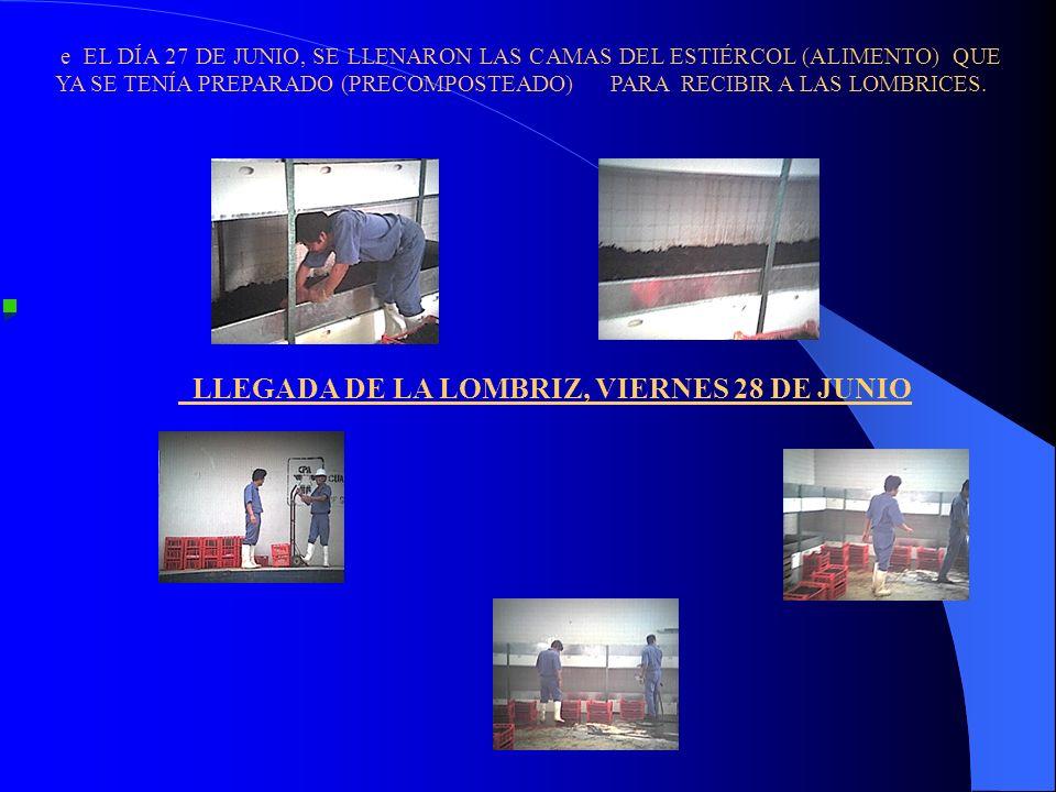 LLEGADA DE LA LOMBRIZ, VIERNES 28 DE JUNIO