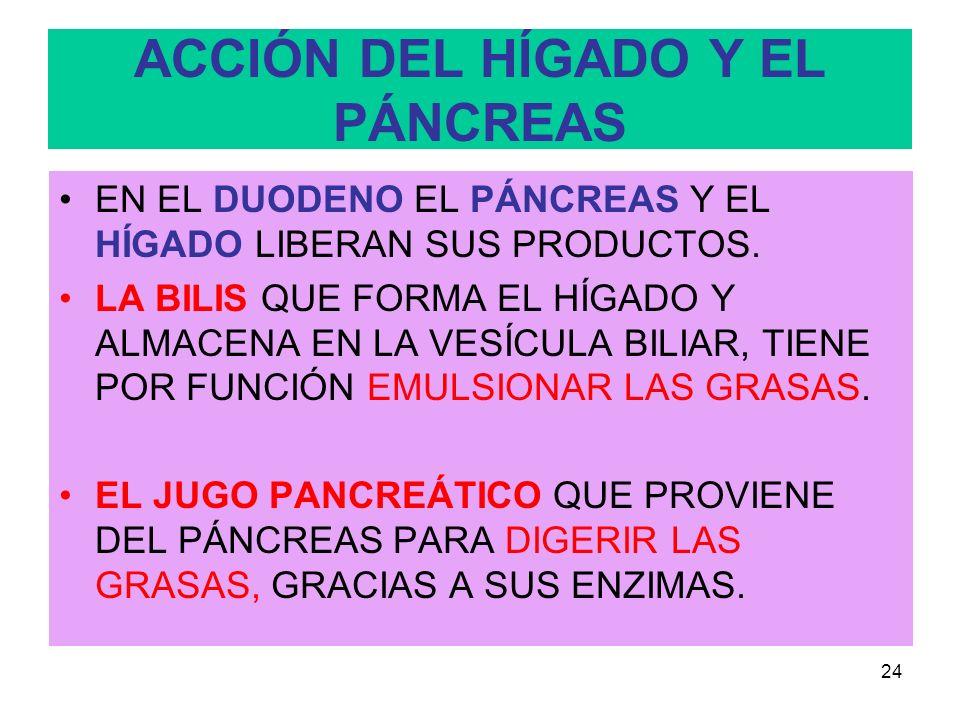 ACCIÓN DEL HÍGADO Y EL PÁNCREAS