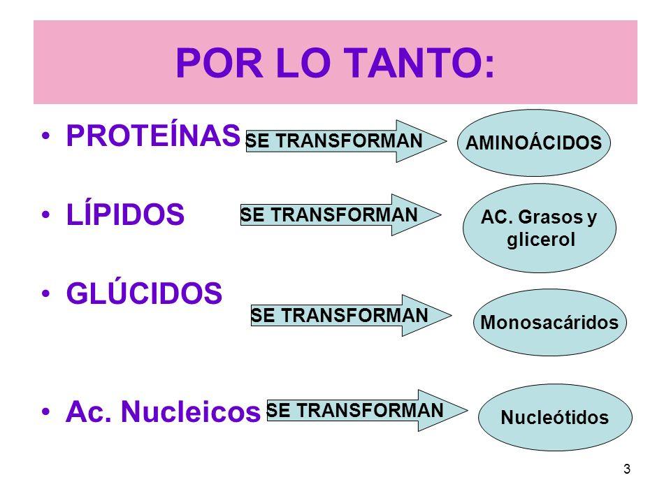POR LO TANTO: PROTEÍNAS LÍPIDOS GLÚCIDOS Ac. Nucleicos AMINOÁCIDOS