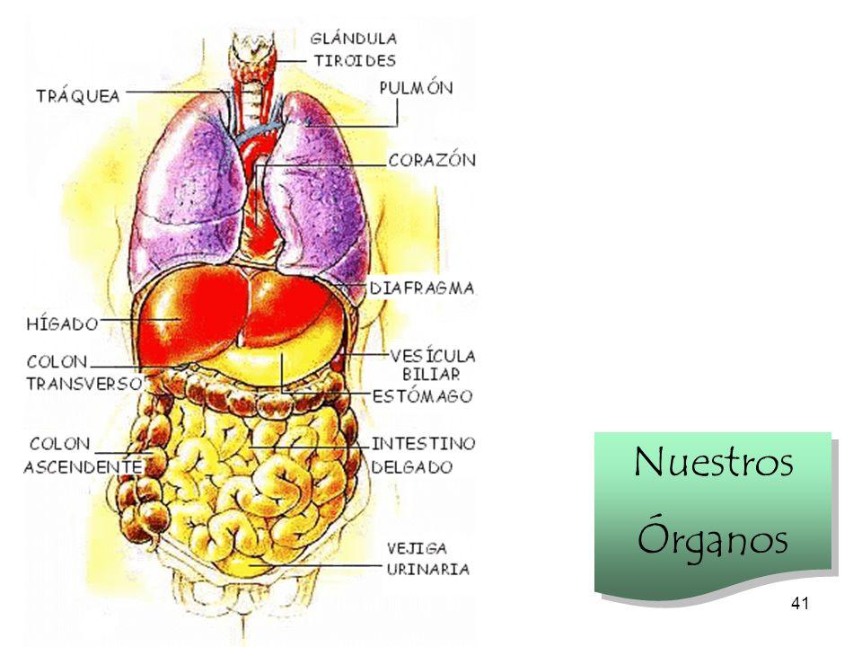 Nuestros Órganos