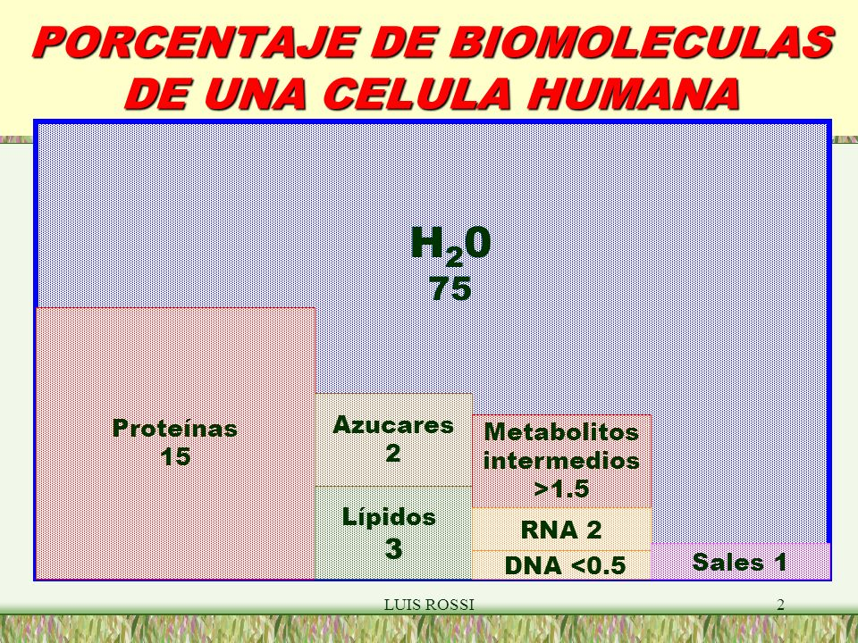 PORCENTAJE DE BIOMOLECULAS DE UNA CELULA HUMANA