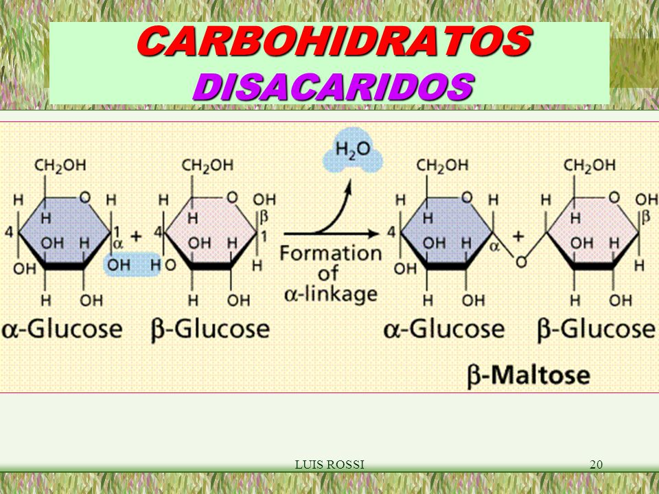 CARBOHIDRATOS DISACARIDOS