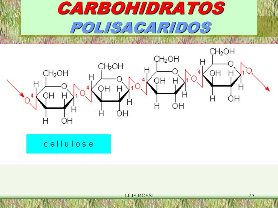 CARBOHIDRATOS POLISACARIDOS