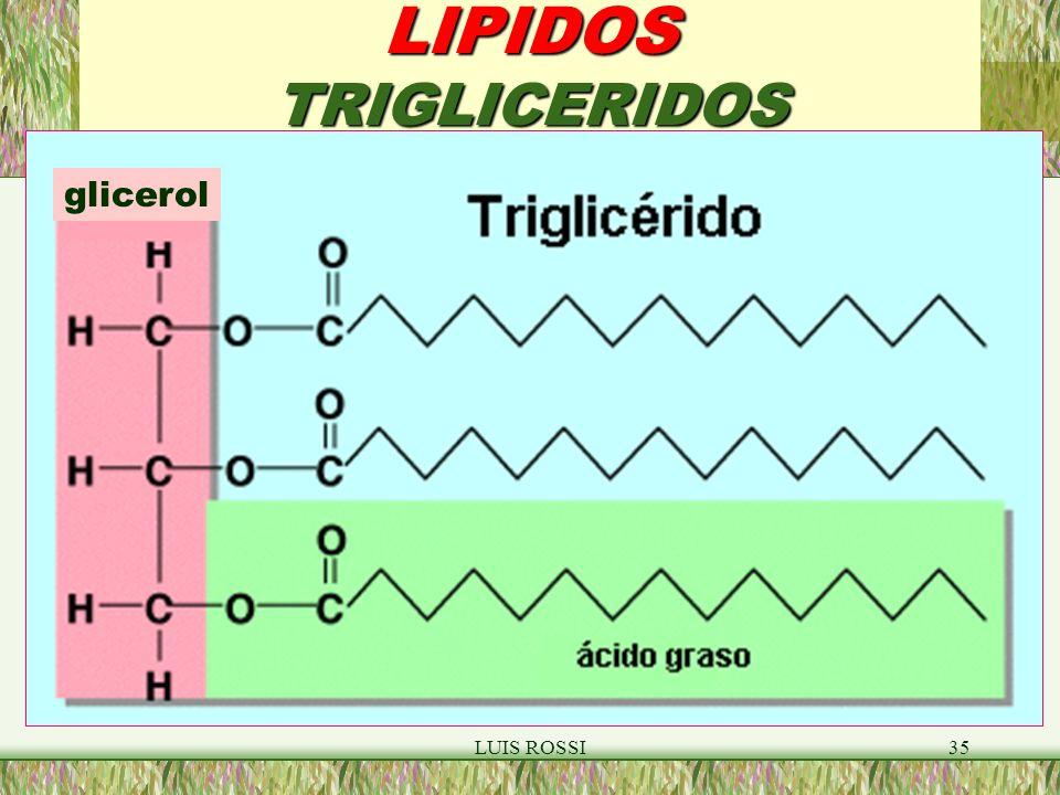 LIPIDOS TRIGLICERIDOS