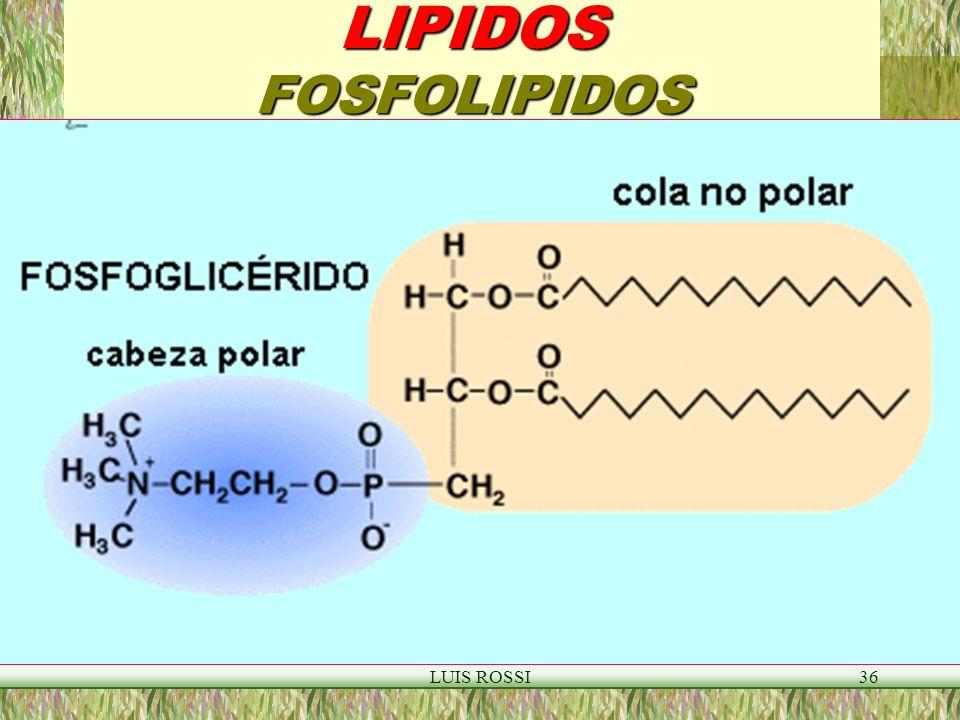 LIPIDOS FOSFOLIPIDOS LUIS ROSSI