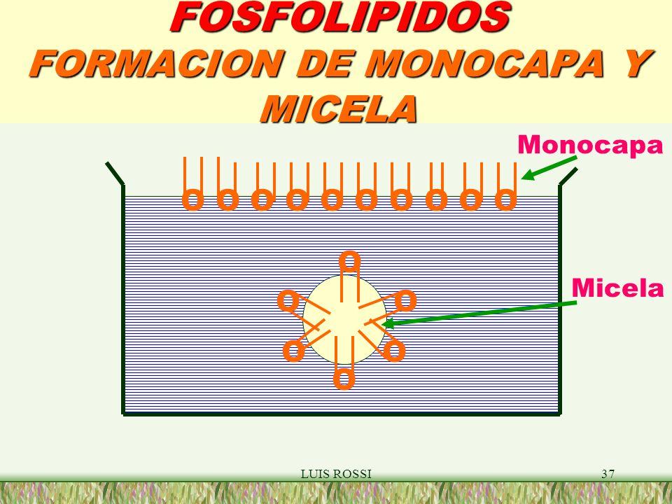 FOSFOLIPIDOS FORMACION DE MONOCAPA Y MICELA
