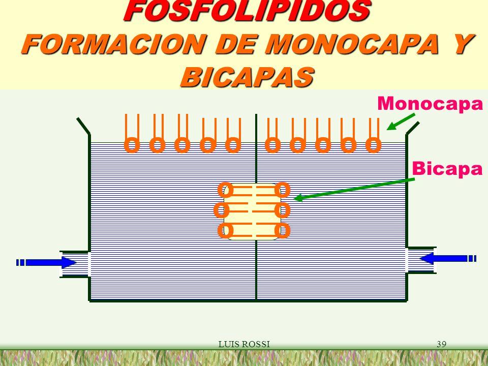 FOSFOLIPIDOS FORMACION DE MONOCAPA Y BICAPAS