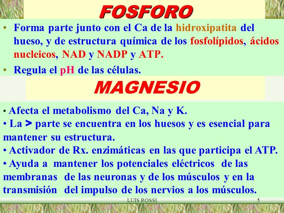 FOSFORO Forma parte junto con el Ca de la hidroxipatita del hueso, y de estructura química de los fosfolípidos, ácidos nucleicos, NAD y NADP y ATP.