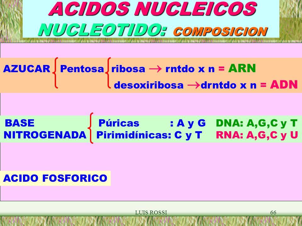 ACIDOS NUCLEICOS NUCLEOTIDO: COMPOSICION