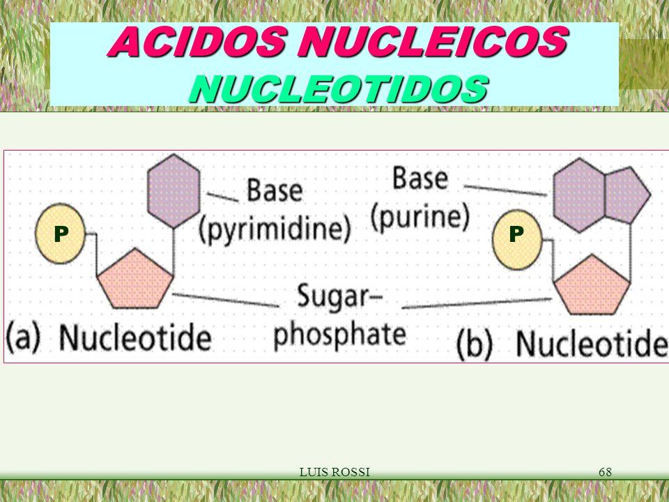ACIDOS NUCLEICOS NUCLEOTIDOS