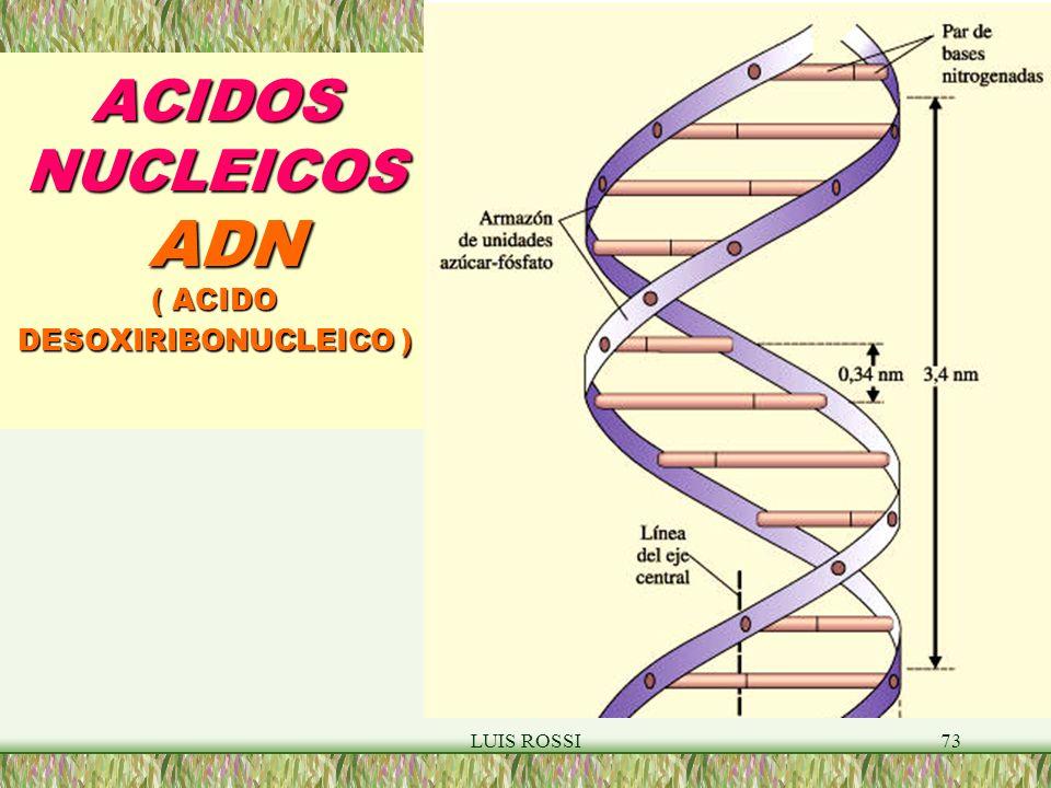 ACIDOS NUCLEICOS ADN ( ACIDO DESOXIRIBONUCLEICO )