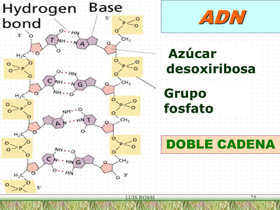 ADN Azúcar desoxiribosa Grupo fosfato DOBLE CADENA LUIS ROSSI