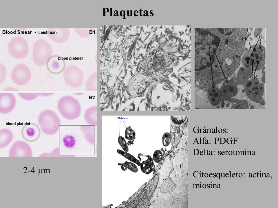 Plaquetas Gránulos: Alfa: PDGF Delta: serotonina