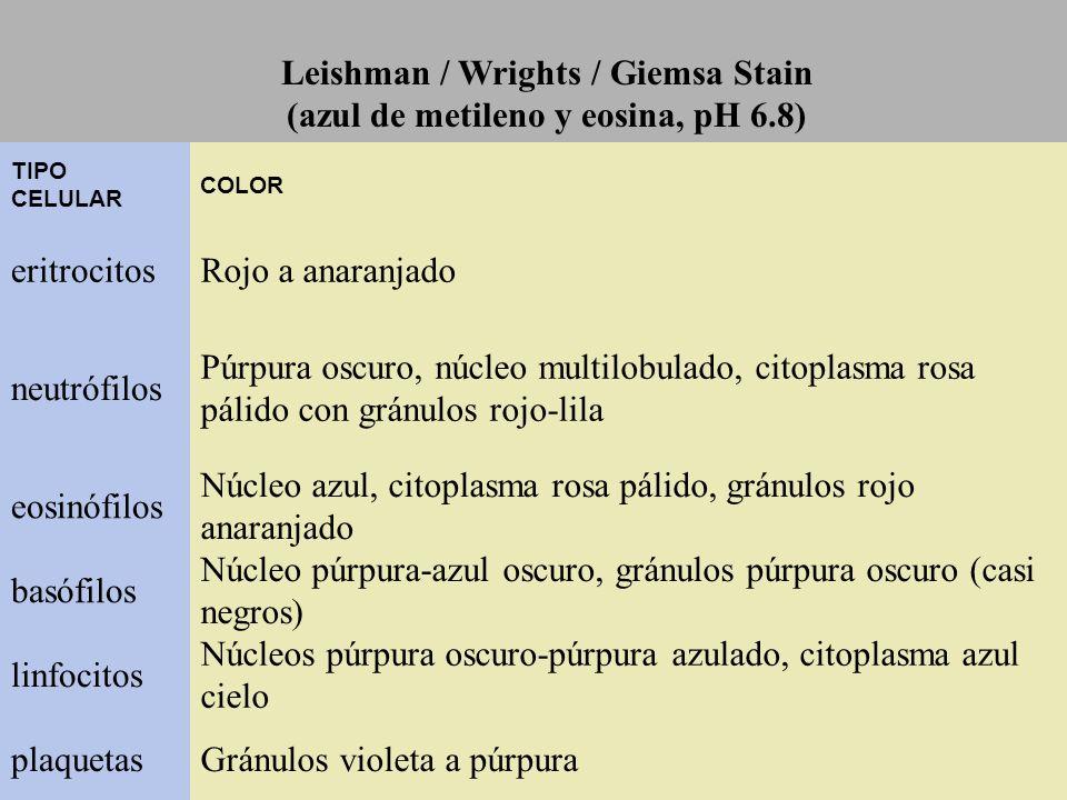 Leishman / Wrights / Giemsa Stain (azul de metileno y eosina, pH 6.8)