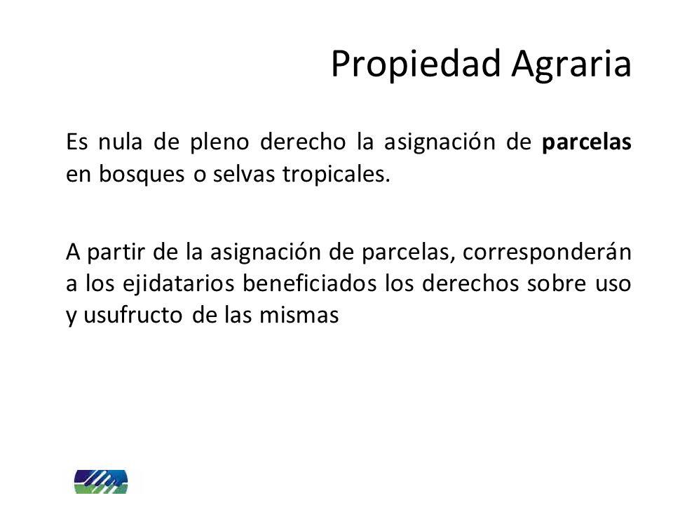 Propiedad Agraria Es nula de pleno derecho la asignación de parcelas en bosques o selvas tropicales.
