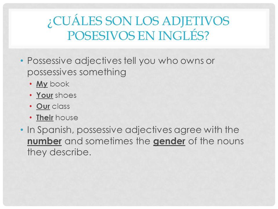 ¿cuáles son los adjetivos posesivos en inglés