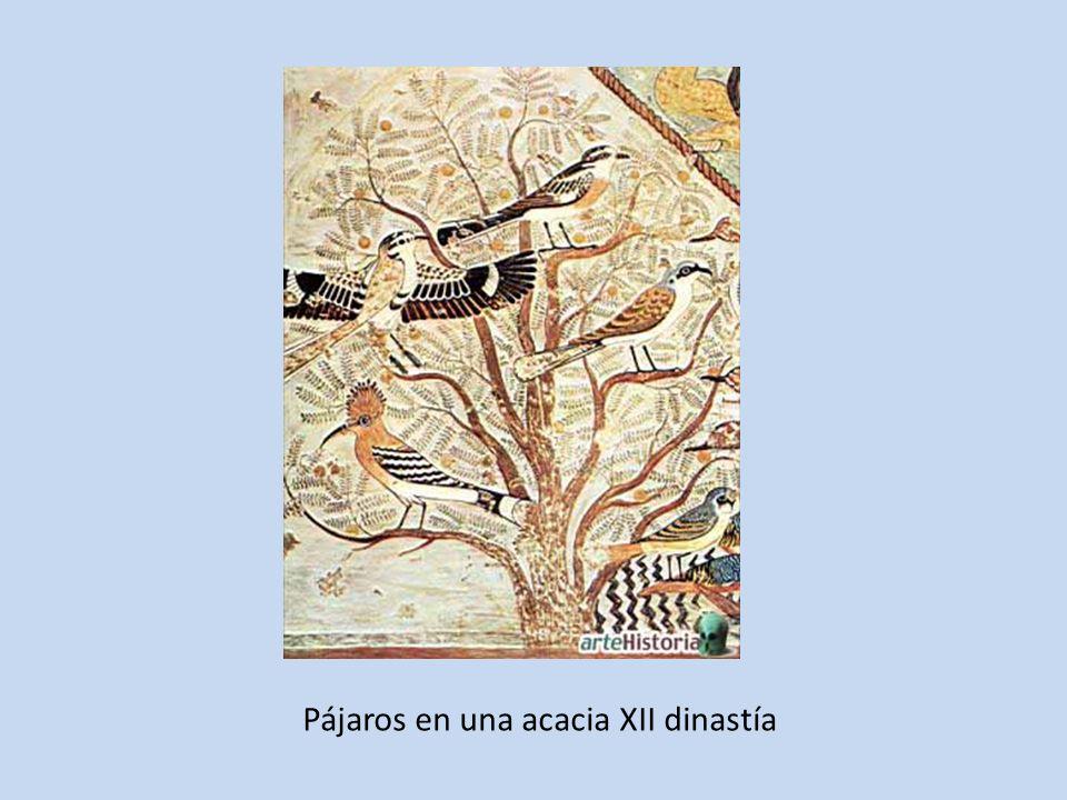 Pájaros en una acacia XII dinastía