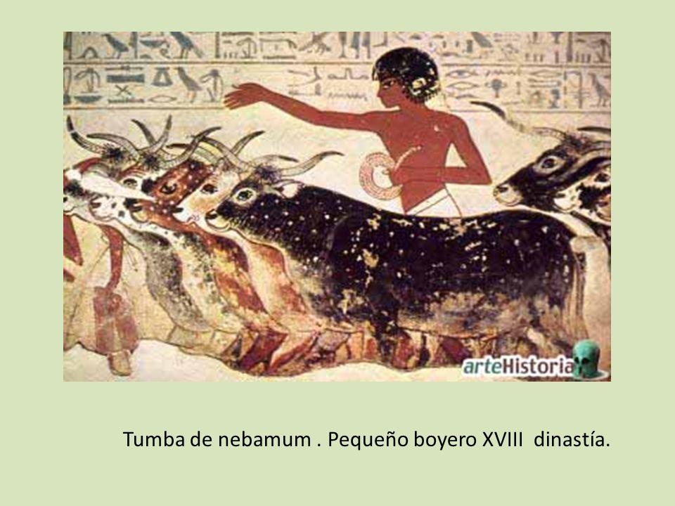 Tumba de nebamum . Pequeño boyero XVIII dinastía.